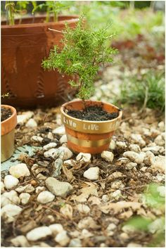 Are Spray Painted Terra Cotta Pots Safe For Herbs