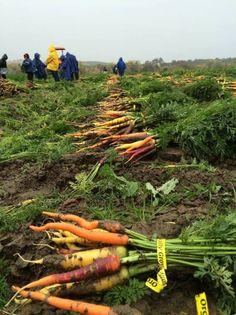 Capay Organic is an #organic #farm. http://www.organicauthority.com/capay-organic-a-second-generation-organic-farm/