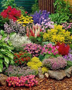 a mixture of beautiful perennials #FlowerGarden
