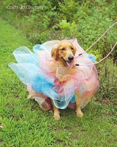 Looking for an easy Halloween dog costume? I made a fun Loofah costume for my dog, just using a child's shirt and some decorative mesh. Perfect dog costume in no time!