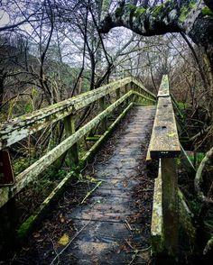 Neature hikes are fun especially in Cali • • #MuirWoodsNationalPark #MillValley #California #hiking #outdoors #pathlesstraveled #nature #adventures #explore #thegreatoutdoors