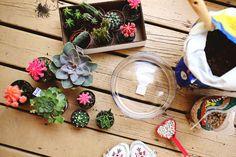 Planting a simple catci garden www.abeautifulmess.com (supplies)
