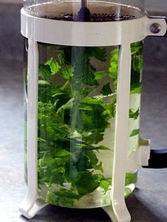 Lemon balm tea: By Andrea_44 from Leamington, Ontario , Canada [CC-BY-2.0 (http://creativecommons.org/licenses/by/2.0)], via Wikimedia Commons