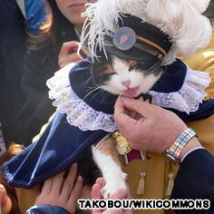 Tama - the cat that saved a Japanese train station