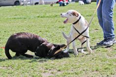 Dog Park Manners and Basic Rules to Follow. Wish many dog owners I see followed these rules. It would have made our experiences easier with our rescued dogs trying to get them socialized. It's frustrating when we're trying to help our dogs and other owners are not taking care of their dogs and they are being problematic.