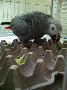 Like Pampered Parrot on Facebook to learn how to turn everyday items into fun for your parrot!