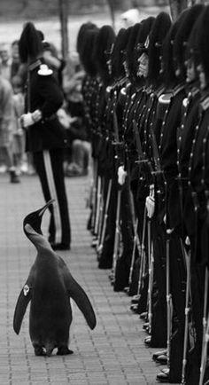 Le pingouin donne les ordres!