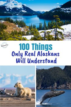 Living in Alaska is not exactly your typical American living and these 100 things that only real Alaskans will understand highlight those differences. Alaska Camping, Alaska Travel, Travel Usa, Travel Tips, Kenai River, Living In Alaska, Day Tours, Time Travel, Trip Planning