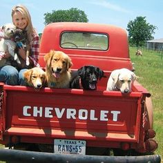WIL's Top Country Pics of the Year: Miranda Lambert showed her passion for rescue dogs!