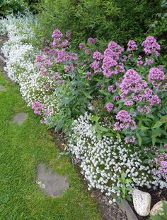 Landscaping With Rocks - How You Can Use Rocks Thoroughly Within Your Landscape Style Centranthus Ruber Alyssum Maritima By Jon Orue Garden Shrubs, Garden Beds, Garden Plants, Garden Landscaping, Flower Gardening, Flower Garden Borders, Pink Perennials, Hydroponic Plants, Pink Garden