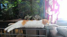 pitkä kissa