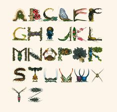 'Insect Alphabet', A Stunningly Detailed Alphabet Created With Drawings of Bugs, Arachnids, & Other Creepy-Crawlies
