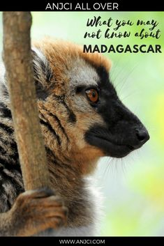 ANJCI ALL OVER | What you may not know about Madagascar #madagascar #travel