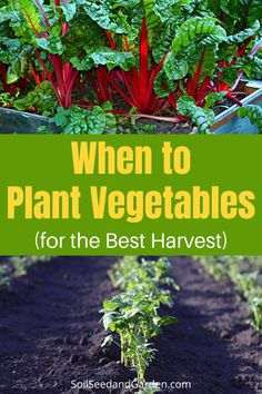 When to Plant Vegetables in Your Garden to Get the Best Harvest When To Plant Vegetables, Planting Vegetables, Edible Plants, Grow Your Own Food, Plant Care, Gardening Tips, Planting Flowers, Harvest, Succulents