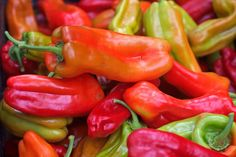 Try This Roasted Red Pepper Recipe (Piperies Psites) Recipe