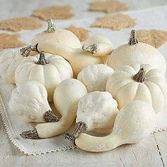 Crafting and Displaying Factory Direct Craft Package of 180 Miniature Artificial Pumpkins for Home Decor