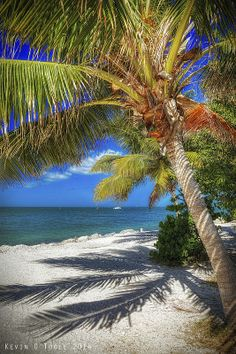 Key West Winter