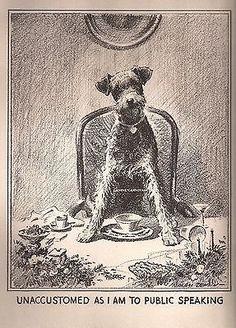 Morgan Dennis c. Chien Fox Terrier, Wire Fox Terrier, Airedale Terrier, Terrier Dogs, Terriers, Scottish Deerhound, Irish Wolfhound, Large Dog Breeds, Irish Setter