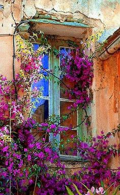 Window looking for my ..........