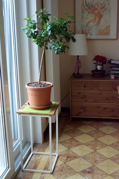 Plant stand made of an Ikea clothes hamper and a piece of stained plywood on top.