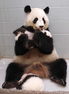 A panda mom discovered that she was delighted with her baby. | The 50 Cutest Things That Happened This Year
