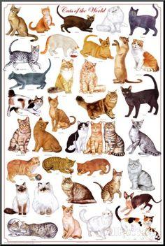 Världens katter, utbildningsplansch, engelska - Monterat tryck på AllPosters.se