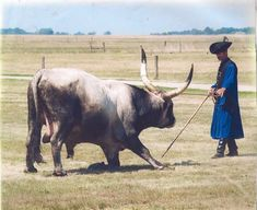 Bull Cow, Alien Concept, Anthropology, Antlers, Cattle, Hungary, Worship, History, Country