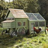 Raising Chickens:  Learn more about coops, chickens and the benefits of farm-fresh eggs.