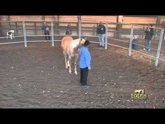 Veterans attend a Monty Roberts Horse Sense and Soldiers for Stress Disorder