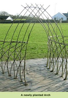 This company is overseas, but what a fun concept - living arches, fences, etc. made from willow!