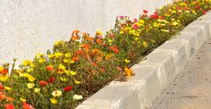 Flori de piatră Sidewalk, Paradis, Interiors, Green, Plant, Side Walkway, Walkway, Walkways, Pavement