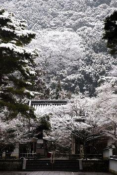 Snowy morning Eikando #japan #kyoto