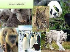 Resultado de imagen para 5 animales en peligro de extincion