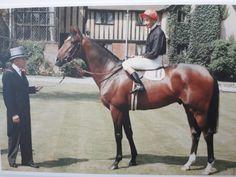 Royal Palace, Horse Racing, Horses, Animals, Animales, Animaux, Animal, Animais, Horse