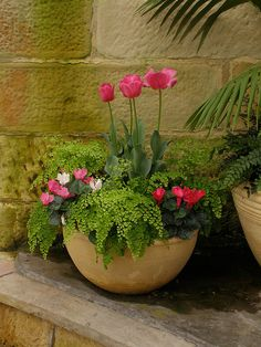 Pink tulips  cyclamen, with maidenhair fern