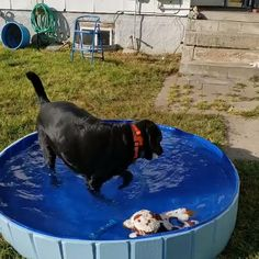 PORTABLE PAW POOL Fish Pool, Baby Pool, Pet Supply Stores, Buy Pets, Online Pet Supplies, Beat The Heat, Pet Accessories, Outdoor Pool, Time Travel