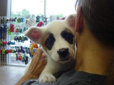 A puppy at the Birmingham Humane Society finds a forever home.  What a lucky family.