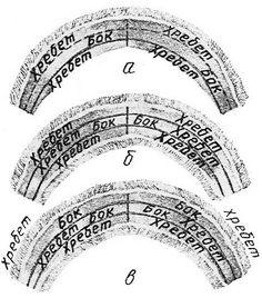 Sable - Три варианта раскроя воротника «шалевый» из трех шкурок: а — две шкурки целиком, третья — вразбивку хребтом к боку; б —'все три шкурки вразбивку: две хребтом к хребту, третья — хребтом к боку; в — все три шкурки вразбивку хребтом к боку