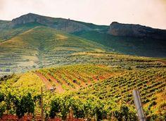 Nuestros viñedos están a 700-800 metros de altitud.
