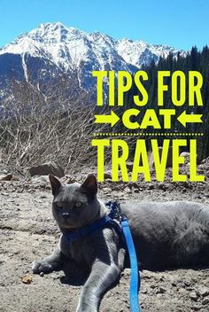 Tips on how to travel with a cat. Advice for road trips right from the pussy cat's mouth. What to bring, and how to prepare for a smooth trip with your cat.