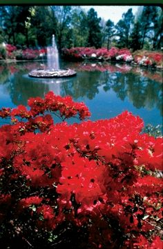 April 1-3, 2013 Muskogee's Honor Heights Park boasts 40 acres of manicured gardens with over 30,000 azaleas in 625 varieties. Visit this stunning park throughout the month of April for one of the top events in the South. The annual Azalea Festival celebrates the blooming of azaleas, tulips, dogwoods and wisteria as these buds begin to unfurl during the warmer temperatures of spring to the delight of visitors. FREE Muskogee, OK 74401  Phone: 918-684-6302
