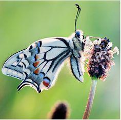beautiful moth
