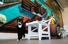 10 Irresistibly Cute Cat Cafes Around the World
