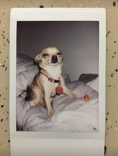 The first pic I took with my Polaroid camera. Bella wasn't ready for her close up. I rudely interrupted her eating her carrot. Tumblr Polaroid, Polaroid Camera, Polaroid Pictures, Blue Sky Photography, Happy Birthday Template, Instagram Frame, Chihuahua Love, Cute Relationship Goals, One Pic