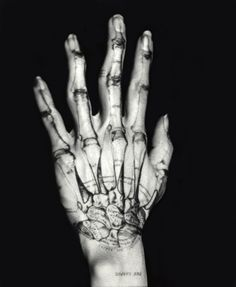 Bone/Hand by Katherine Du Tiel, part of the inside/outside series.  #anatomy #bones #photography