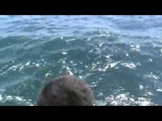 18 ft Great white - YouTube