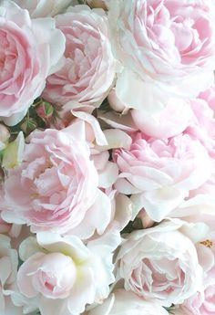 Pretty Pale Pink Peonies 3 Piones Flowers Blush Lavender Roses White