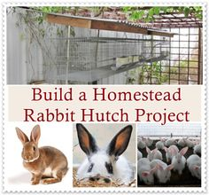 """Build a Homestead Rabbit Hutch Project Homesteading - The Homestead Survival .Com """"Please Share This Pin"""" Raising Rabbits For Meat, Meat Rabbits, Bunny Cages, Rabbit Cages, Outdoor Rabbit Hutch, Rabbit Farm, Small Animal Cage, Rabbit Hutches, Living Off The Land"""