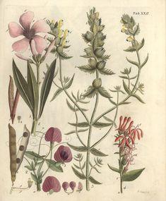 Kupferstich, Hayne Tafel 22