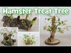 Natural Hamster Treat Trees DIY by Hammy Time. These are my hamster treat trees. Theyre made from various types of wood and edible treats. These trees were inspired my robo hamster Millet. Millet loves to run through his oat spray and knock them down Cool Hamster Cages, Diy Hamster Toys, Robo Hamster, Hamster Food, Hamster Life, Hamster Treats, Hamster Stuff, Gerbil, Robo Dwarf Hamsters